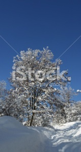 country-side-path-in-snow-stock_photo_by_vlad_baciu