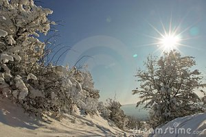 tree-snowy-path-stock_photo_by_vlad_baciu