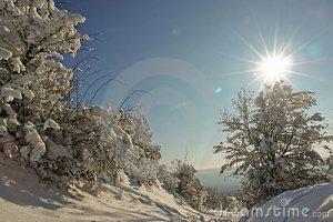 tree-snowy-path-stock_photo_by_vlad_baciu